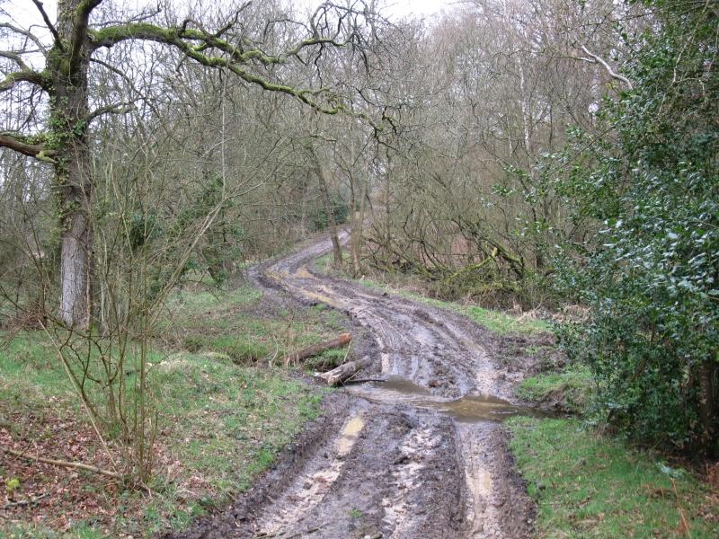 Muddy_path_-_geograph.org.uk_-_1774022